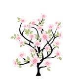 blanc d'arbre de source d'isolement par fond Photographie stock