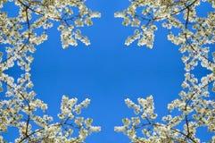 blanc d'arbre de source d'isolement par fond photo libre de droits