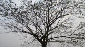 blanc d'arbre de source d'isolement par fond image stock