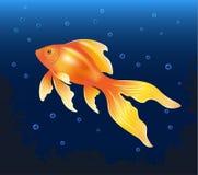 blanc d'isolement d'or de poissons Photographie stock