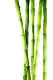 blanc d'isolement par bambou de fond Images libres de droits