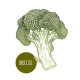 blanc d'isolement par broccoli de fond illustration libre de droits