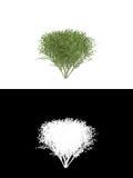 blanc d'isolement par buisson de fond illustration de vecteur
