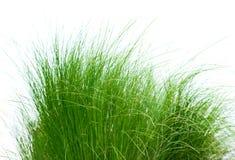 Blanc d'isolement par correction d'herbe verte Images libres de droits