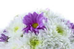 blanc d'isolement par fleur de bouquet Photos libres de droits
