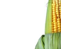 blanc d'isolement par maïs de fond Photo stock