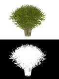 blanc d'isolement par vert décoratif de buisson de fond illustration libre de droits