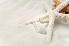 blanc d'étoiles de mer de sable Photo stock