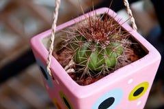 blanc de bac d'isolement par cactus de fond Image libre de droits