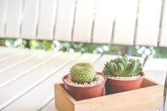 blanc de bac d'isolement par cactus de fond Photos stock