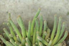 blanc de bac d'isolement par cactus de fond Images stock