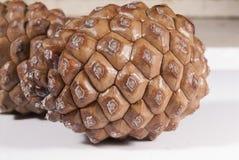 Blanc de cône du pin deux brun d'isolement Photos stock