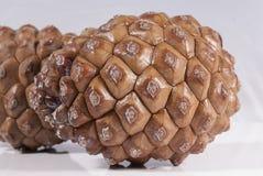 Blanc de cône du pin deux brun d'isolement Photo libre de droits