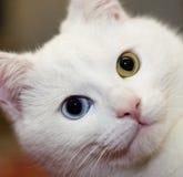 blanc de chat images libres de droits