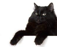 blanc de chat noir de fond Images stock