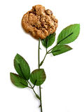 Blanc de cheminée de biscuit photo stock
