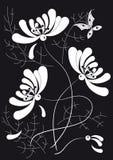 blanc de chrysanthemum de guindineau Images libres de droits