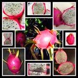 Blanc de Dragonfruit images libres de droits