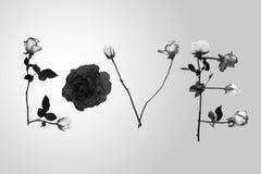 Blanc de fines herbes de noir de jour du ` s de Valentine de roses d'amour d'écriture Photo stock