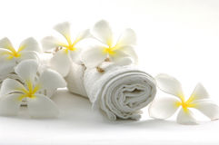 blanc de fleur Images stock