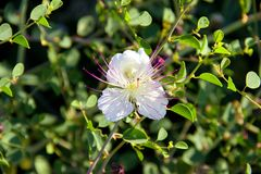 Blanc de fleur Photographie stock
