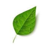 blanc de l'eau de lame d'isolement par vert de baisses illustration stock