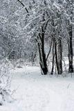 blanc de neige Photos libres de droits