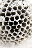 blanc de nid d'abeilles Image stock