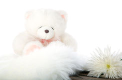 blanc de nounours de fleur d'ours photos libres de droits