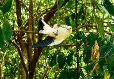 Blanc de pigeon Image libre de droits