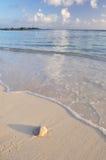 blanc de sable du dollar de plage Photos stock