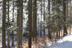 Blanc de trentino d'hiver de neige et vertical en bois Image libre de droits