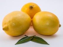 blanc des citrons trois de fond Photos stock