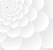 Blanc des fleurs Photos stock