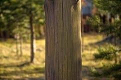 Blanc en bois de poteau Image stock