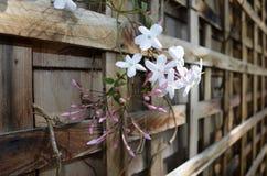 Blanc et fleurs roses sur un mur en bois Images stock