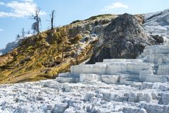 Blanc et terrasses d'or à la terrasse de Mammoth Hot Springs, parc national de Yellowstone, Wyoming, Etats-Unis Photo stock