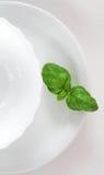 Blanc et vert Photographie stock