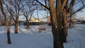 Blanc froid d'hiver de campagne de troncs d'arbres image libre de droits