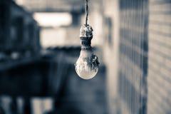 blanc léger d'isolement par ampoules Photo stock