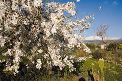 blanc luxuriant fleurissant photographie stock