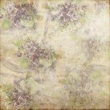 Blanc magenta 145 de fond de vintage de vert grunge doucement Photographie stock libre de droits