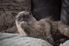 blanc mignon de chat Photos stock