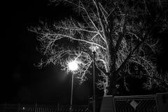 blanc noir d'arbre Photo stock