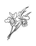 blanc noir de fleur illustration libre de droits