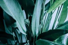 Blanc pour le carton publicitaire ou l'invitation note de carte de Livre vert Photographie stock libre de droits