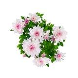 blanc rose d'isolement par chrysanthemum de bouquet Photo stock