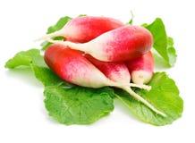 blanc rouge d'isolement frais de radis images libres de droits
