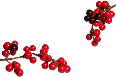 blanc rouge d'isolement par houx de décoration de Noël image stock