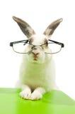 blanc s'usant de lapin en verre Photo stock